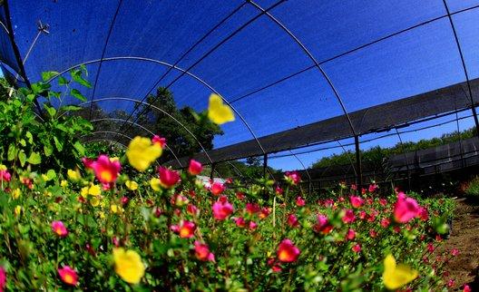 Foto de uma estufa de flores do Parque Municipal